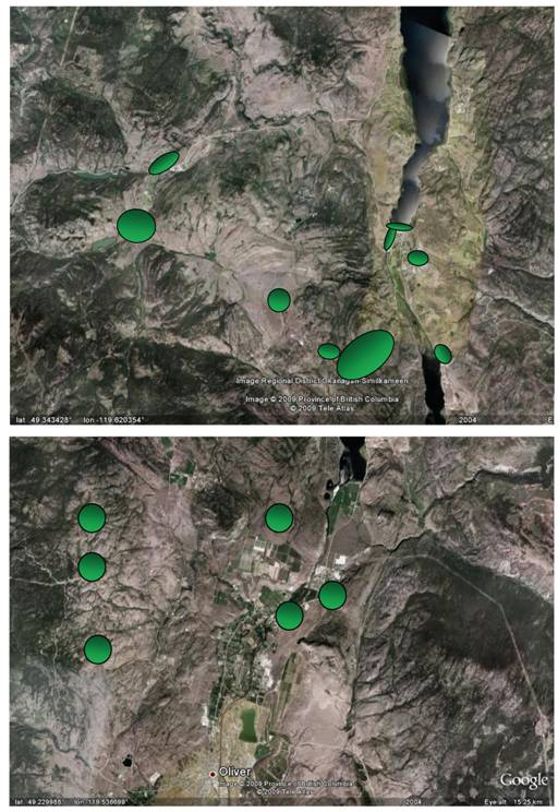 Satellite image of Okanagan Falls, Oliver, and area showing locations where searches were made for Cicindela parowana wallisi during the preparation of this report.