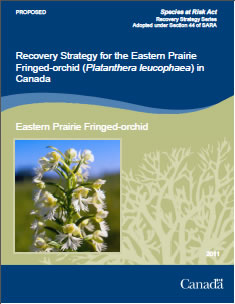 Cover of the publication: Recovery Strategy for the Eastern Prairie Fringed-orchid (Platanthera leucophaea) in Canada [PROPOSED] – 2011