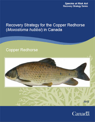 Species at Risk Act recovery strategy series, recovery strategy for the copper redhorse (Moxostoma hubbsi) in Canada.