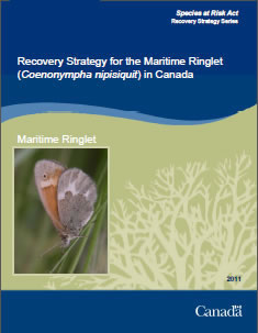 Cover of the publication: Recovery Strategy for the Maritime Ringlet (Coenonympha nipisiquit) in Canada [– 2012