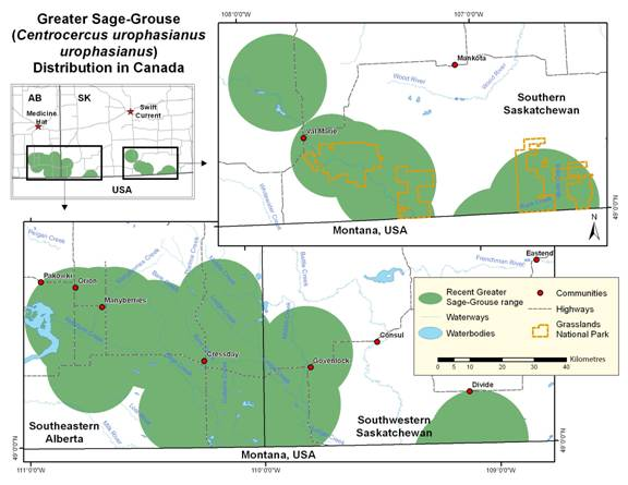 A map that shows two separate areas where Greater Sage-Grouse are found.