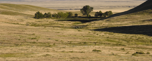 photo of rolling native prairie