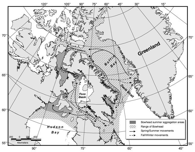 Map showing generalized seasonal occurrence and movements of the Eastern Canada-West Greenland population of the Bowhead Whale Balaena mysticetus.