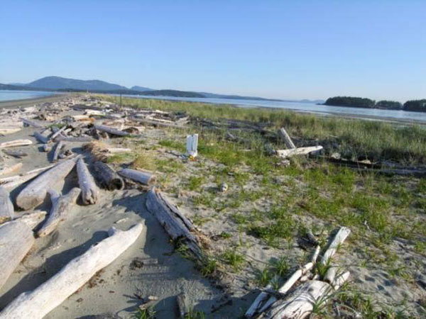 The photos show habitat at(a) Sidney Island, British Columbia