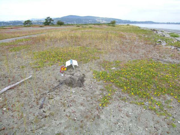 The photos show habitat at (c) a dune with Abronia latifolia on James Island, British Columbia