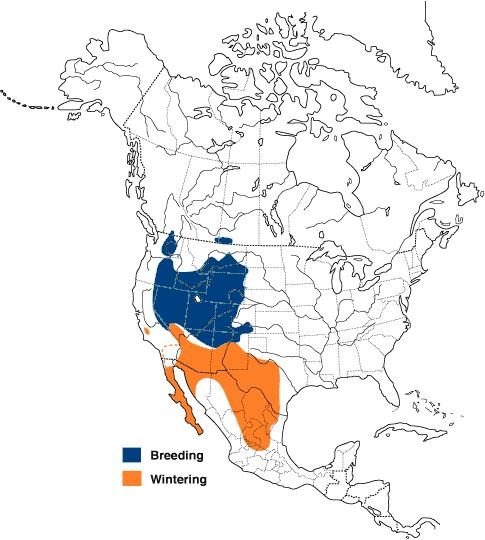 Figure 1 shows the global distribution of Sage Thrasher, which occurs predominantly throughout the western and central United States, some breeding in southeastern British Columbia, southeastern Alberta and southwestern Saskatchewan, with wintering distributions occurring south into Mexico.