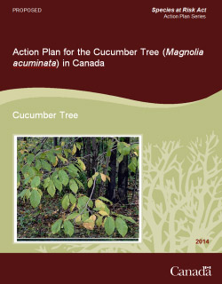 Cover: Action Plan for the Cucumber Tree (Magnolia acuminata) in Canada [Proposed] - 2014