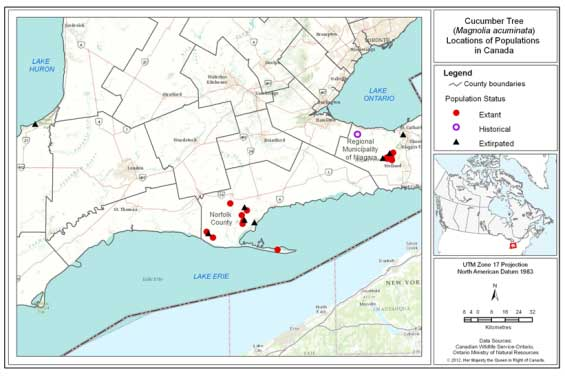 Figure 2 is a map that shows the location of extant, historical and extirpated populations of Cucumber Tree in southern Ontario. (See long description below)