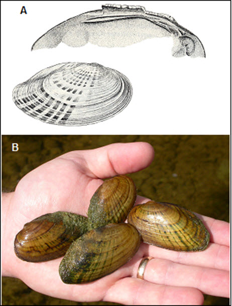 images of shells