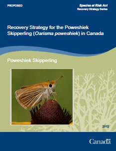 Cover of the publication: Recovery Strategy for the Poweshiek Skipperling (Oarisma poweshiek) in Canada [Proposed] – 2012.