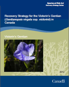 Cover of the publication: Recovery Strategy for the Victorin's Gentian (Gentianopsis virgata ssp. victorinii) in Canada  – 2012.