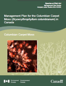 Cover of publication: Management Plan for the Columbian Carpet Moss (Bryoerythrophyllum columbianum) in Canada – 2012