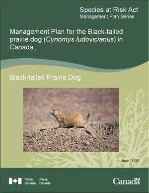 Species at Risk Act Recovery Strategy Series Management Plan for the Black-tailed prairie dog (Cynomys ludovicianus) in Canada