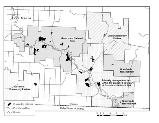 Figure 2. Black-tailed prairie dog colonies on lands managed by the different jurisdictions in Canada. The responsible jurisdictions for these lands are the Parks Canada Agency (Grasslands National Park), Saskatchewan Agriculture (Dixon Community Pasture), the Agri-Environment Services Branch, Agriculture and Agri-Food Canada (Masefield Community Pasture) and private land managers or owners.