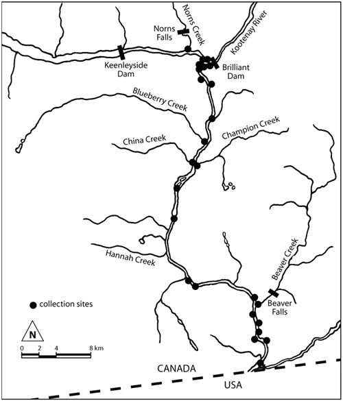Map of Cottus hubbsi collection sites in the Columbia population.