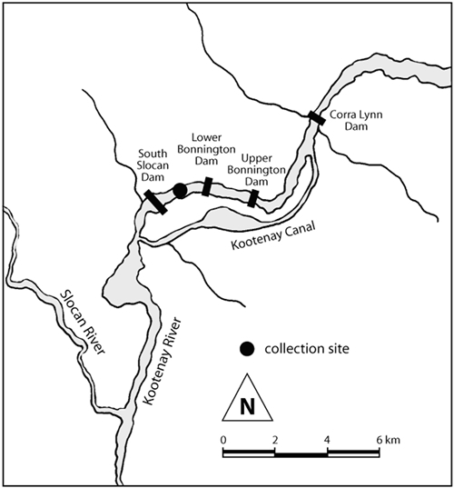 Map of Cottus hubbsi collection sites in the Bonnington population.