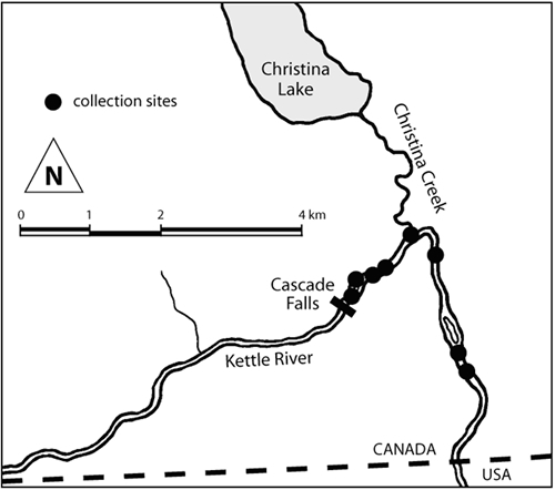 Map of Cottus hubbsi collection sites in the Kettle population.