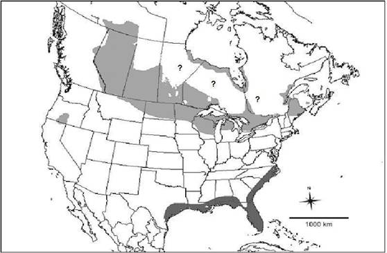 Map showing the approximate breeding and wintering range of Yellow Rails in North America.