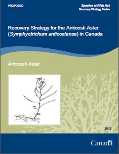 Cover of the publication: Recovery Strategy for the Anticosti Aster (Symphyotrichum anticostense) in Canada [PROPOSED] – 2012.