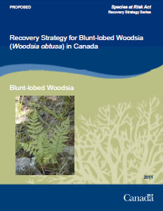 Cover of the publication: Recovery Strategy for Blunt–lobed Woodsia (Woodsia obtusa) in Canada [PROPOSED] – 2011