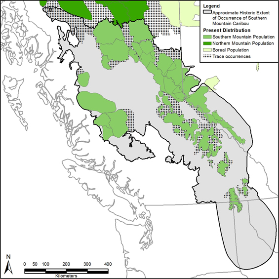This figure is a map showing current distribution of the southern mountain caribou within the SMNEA (same as figure 1) in contrast with the approximate historic distribution. (See long description below)