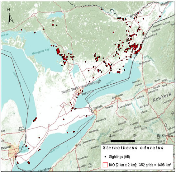 Map of index of area of occupancy of the Eastern Musk Turtle in Canada (see long description below).