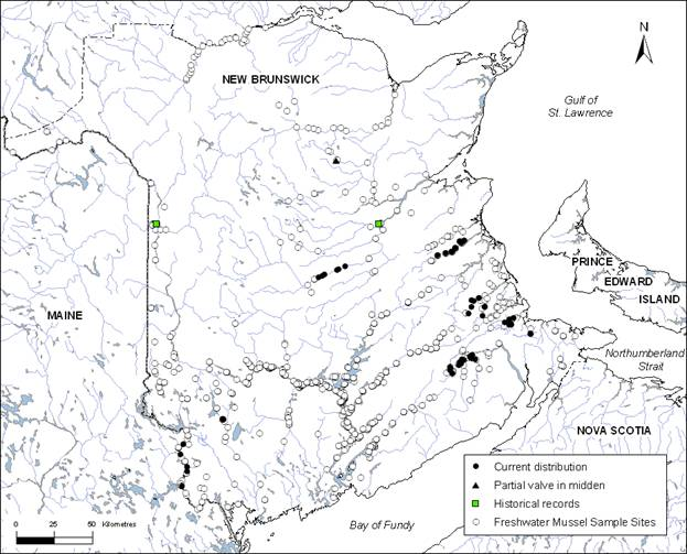 Map showing the distribution of the Brook Floater in New Brunswick. (See long description below)
