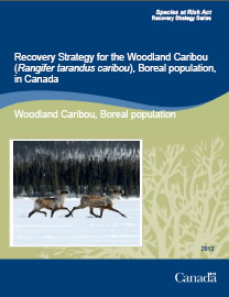 Cover page of the publication: Recovery Strategy for the Woodland Caribou (Rangifer tarandus caribou), Boreal population, in Canada - 2012.
