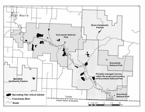 Map showing critical habitat for Burrowing Owls identified as the area within the black-tailed prairie dog colonies in Canada as per 2007 boundaries.