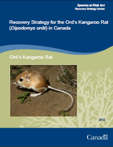 Cover of the publication: Recovery Strategy for the Ord's Kangaroo Rat (Dipodomys ordii) in Canada – 2012