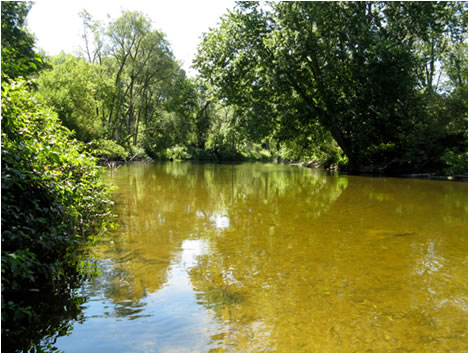 Photo of Hungerford's Crawling Water Beetle  habitat on the Saugeen River, Ontario.