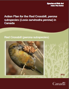 Cover of publication: Action Plan for the Red Crossbill, percna subspecies (Loxia curvirostra percna) in Canada – 2012