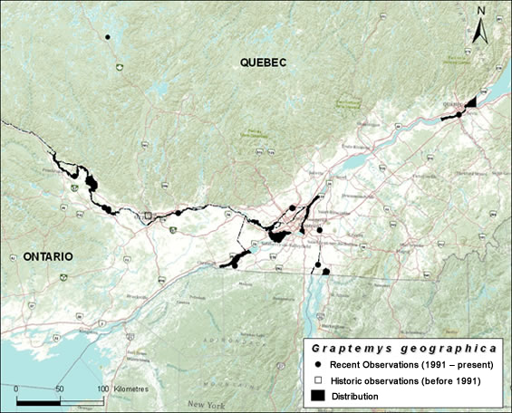 Map of the distribution of the Northern Map Turtle in southwestern Quebec (see long description below).