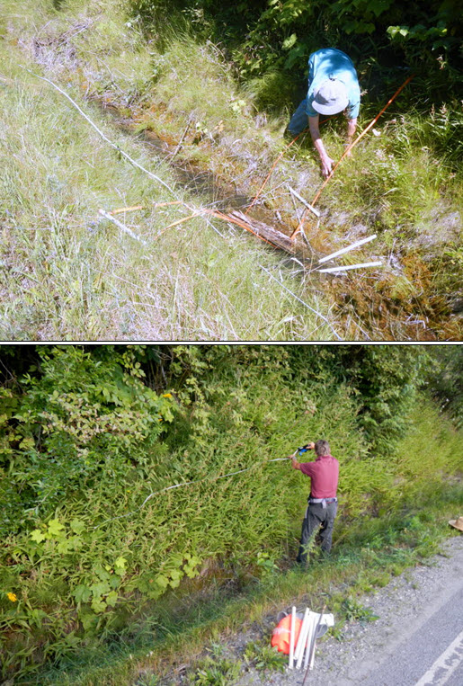 Two images of researches in Giant Helleborine habitat