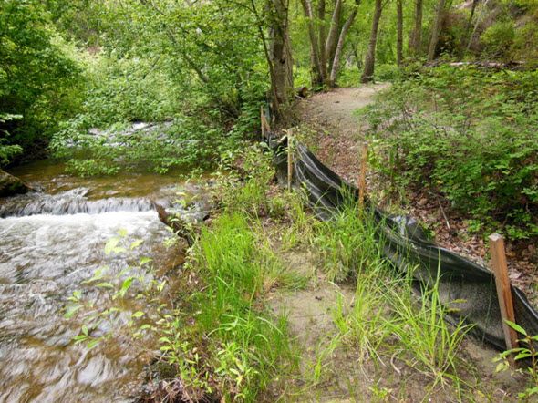 Image of Giant Helleborine habitat along a river bank