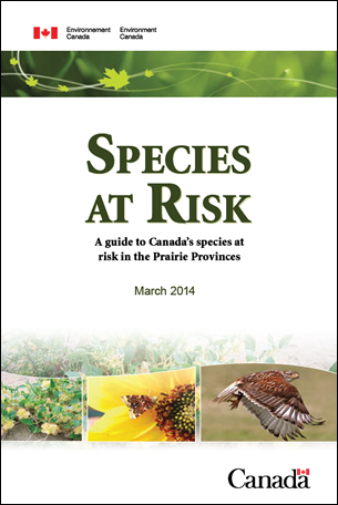 Cover photo of Species at Risk - A guide to Canada's species at risk in the Prairie Provinces – March 2014