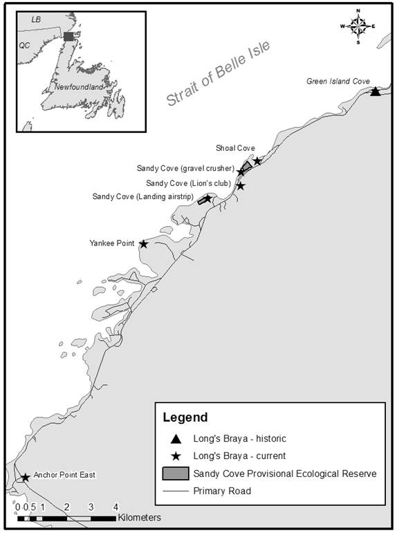 Figure 2 shows the historic and current distribution of Long's Braya on the Great Northern Peninsula of insular Newfoundland