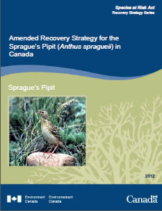 Amended Recovery Strategy for the Sprague's Pipit (Anthus spragueii) in Canada – 2012
