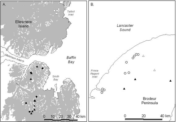 Map showing the status of Ivory gull colonies on Ellesmere Island and Baffin Island.