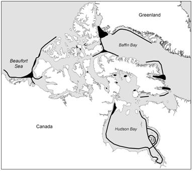 Map showing open water areas (polynyas and shore leads) in the Canadian Arctic during spring.