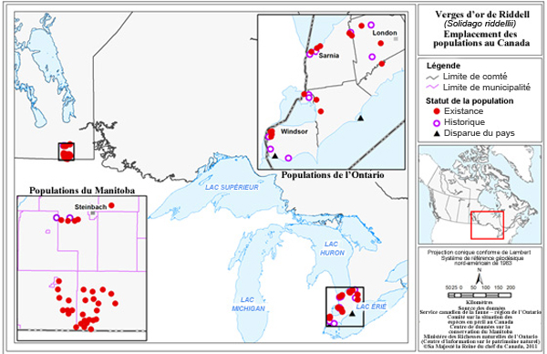 Locations of Riddell's Goldenrod populations in Canada