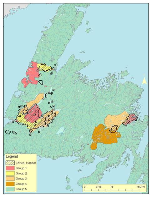 Figure 6 shows the location of critical habitat receiving some level of protection.  Note that this is the Province of Newfoundland and Labrador's assessment of protection and is not an assessment of critical habitat protection under SARA.