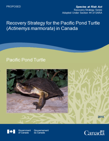 Cover photo for the Recovery Strategy for the Pacific Pond Turtle (Actinemys marmorata) in Canada [Proposed].