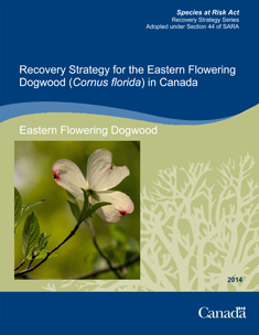 Eastern flowering Dogwood cover page