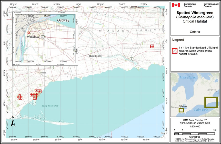 Figure 2 shows the location of the grid squares for critical habitat near Windsor, Ontario.