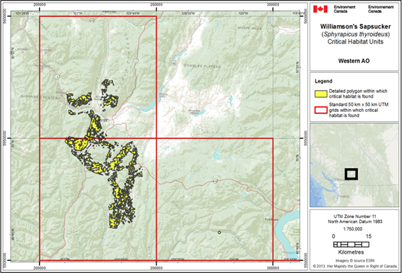 Figure 3 is a map showing the critical habitat for Williamson's Sapsucker in the Western area of occupancy. The area within which critical habitat is found is shown as yellow polygons within three red 50 km x 50 km UTM grid squares (31, 600 ha).