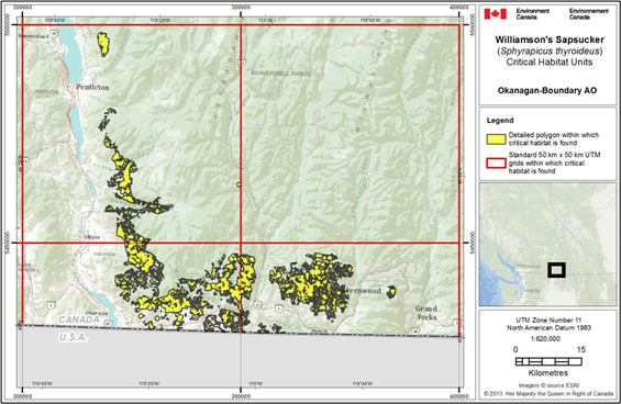 Figure 4 is a map showing the critical habitat for Williamson's Sapsucker in the Okanagan-Boundary area of occupancy. The area within which critical habitat is found shown as yellow polygons within four red 50 km x 50 km UTM grid squares (37, 699 ha).