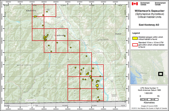 Figure 5 is a map showing the critical habitat for Williamson's Sapsucker in the East Kootenay area of occupancy. The area within which critical habitat is found is shown as yellow polygons within 19 red 10 km x 10 km UTM grid squares (4260 ha).