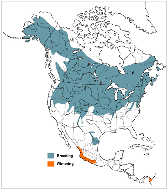 Map illustrating the North American and Mesoamerican breeding range and wintering range of the Bank Swallow.