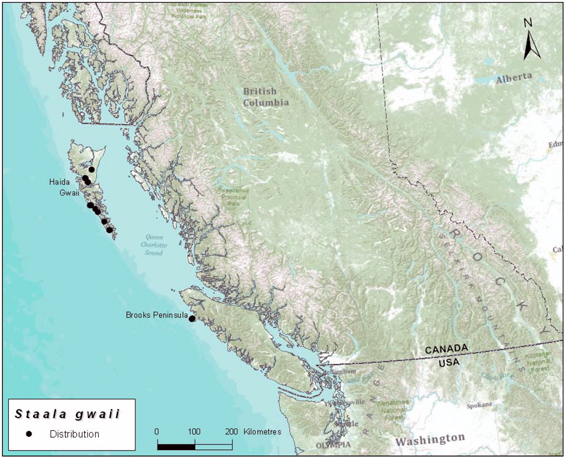 Map illustrating the global and Canadian distribution of Haida Gwaii slug.